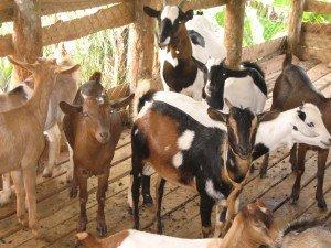 animals in Uganda