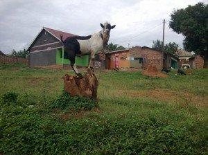 Volunteer on a farm in Africa