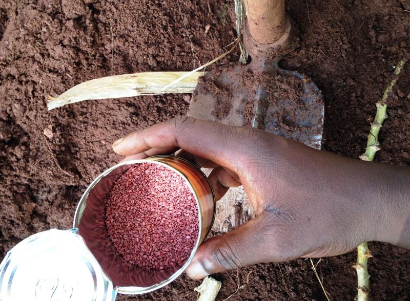 volunteer in Uganda and plant carrots in community gardens