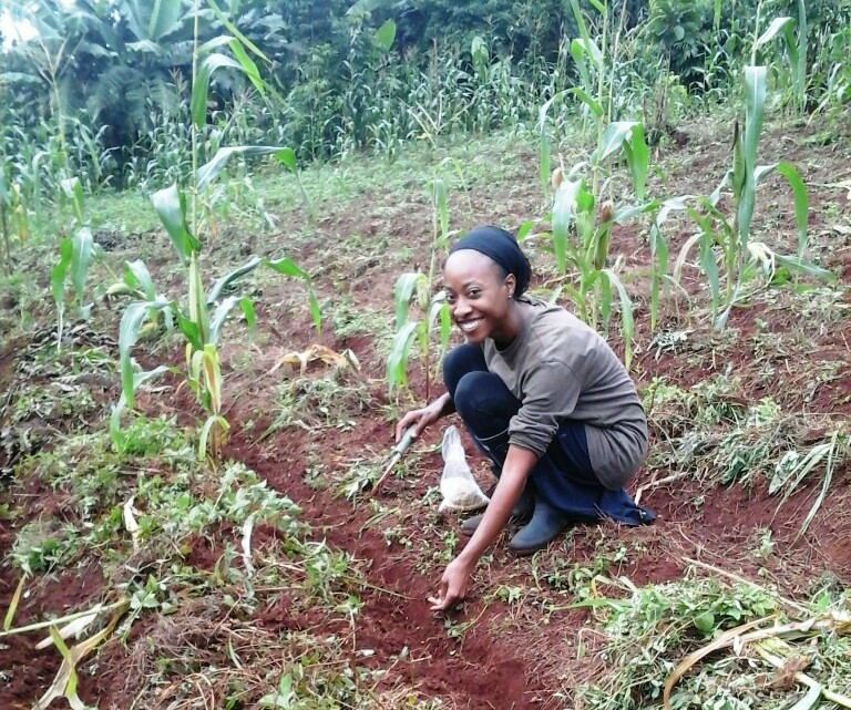Planting soy beans in the maize garden