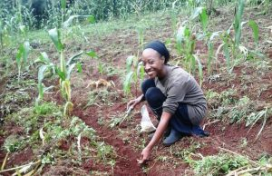 Volunteer on a farm in Uganda and help a community achieve food security.