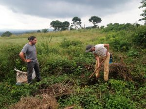 Volunteers planting mango trees in Uganda, Africa