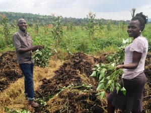 Volunteer on a farm in Uganda. Exercise, clean air, and local food security